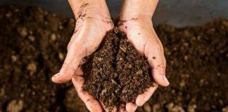 Curso gratuito de compostagem está com inscrições abertas